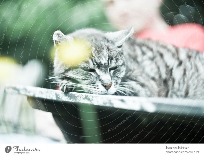Calm Relaxation Cat Garden Leisure and hobbies Masculine Sleep Table Beautiful weather Dandelion Sunbathing Pet Domestic cat Tabletop Wooden table Doze