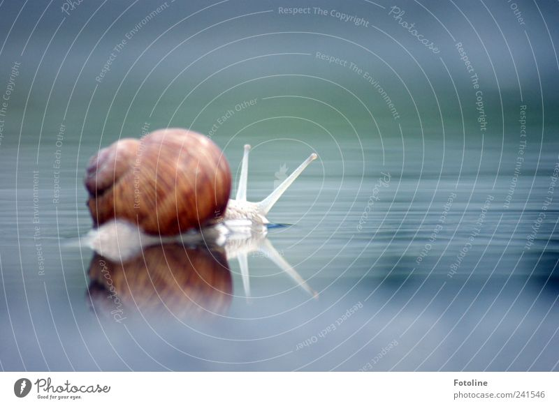 For sylvi.bechle for the 200th anniversary! Environment Nature Animal Elements Water Snail 1 Bright Near Wet Natural Vineyard snail Large garden snail shell