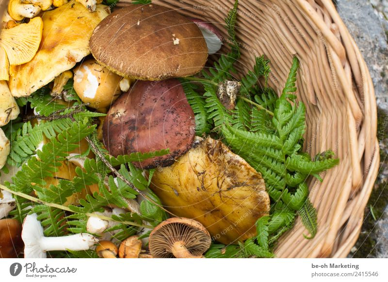 Mushrooms in basket Food Nutrition Slow food Nature Plant Earth Autumn Fern Agricultural crop Wild plant Forest Sustainability Natural Brown Yellow Green wobbly