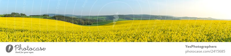 Rape fields at sunrise in Moravia Summer Industry Environment Nature Landscape Plant Horizon Hill Yellow Green Energy Vacation & Travel Earth Spring