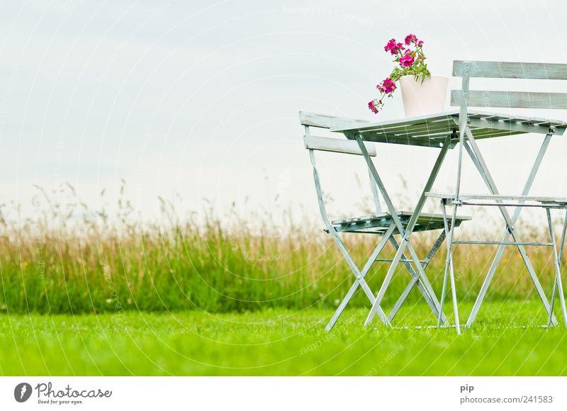 Nature Flower Green Plant Summer Calm Loneliness Relaxation Meadow Grass Garden Landscape Field Pink Environment Free