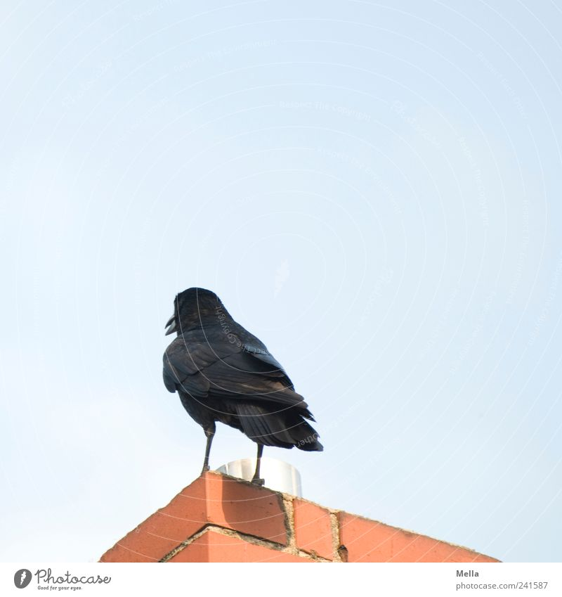 Animal Building Bird Environment Perspective Stand Chimney Cancelation Crow Dismissive