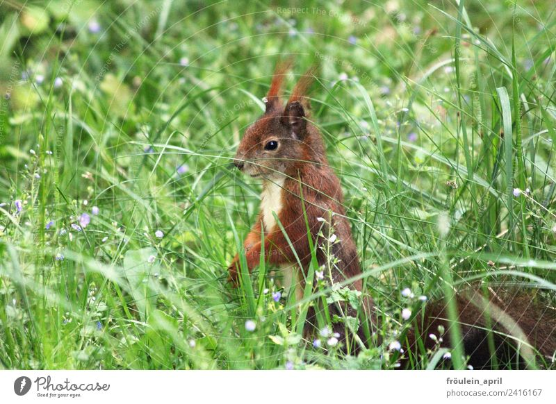 Nature Summer Red Animal Environment Spring Meadow Grass Small Brown Free Wild animal Cute Observe Curiosity Pelt