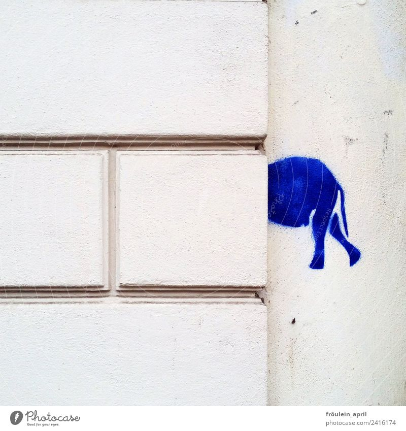 Where are you going? Design Art Illustration stencil Wall (barrier) Wall (building) Elephant Stone Sign Graffiti Think Discover Blue White Surprise Esthetic