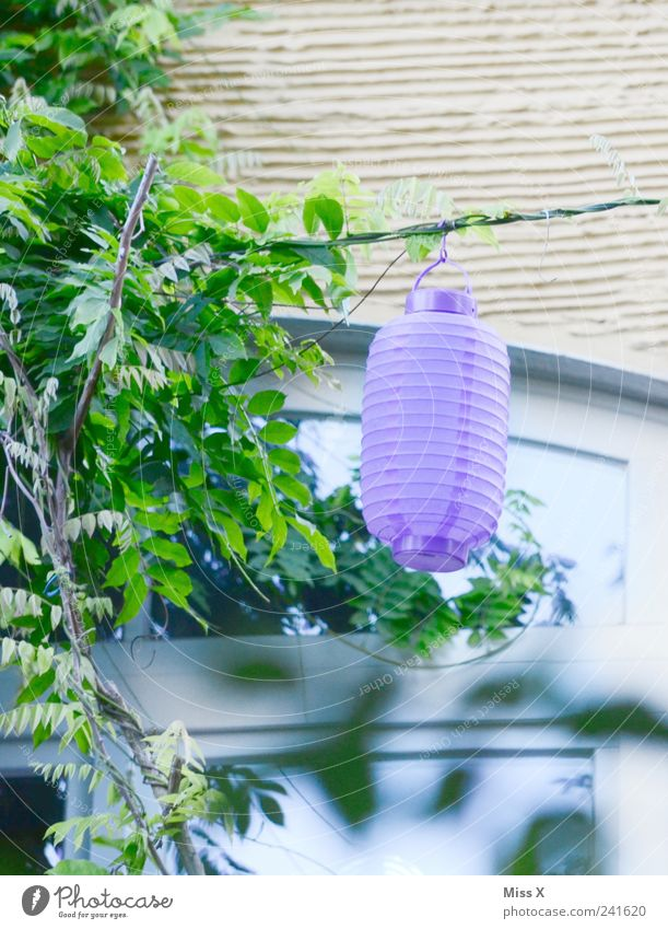 Plant Summer Leaf Garden Feasts & Celebrations Bushes Decoration Violet Illuminate Lampion Seasons Garden festival