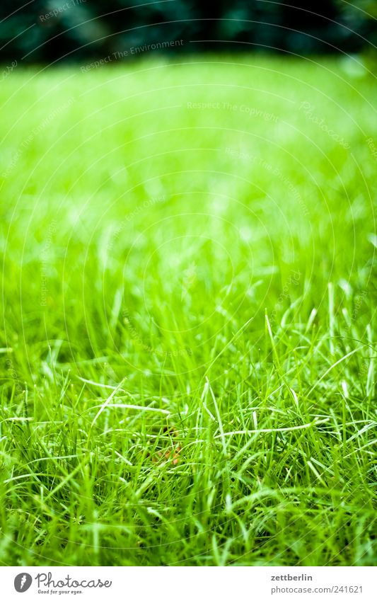 Nature Green Plant Summer Leaf Meadow Blossom Grass Garden Park Landscape Weather Environment Growth Lawn Climate