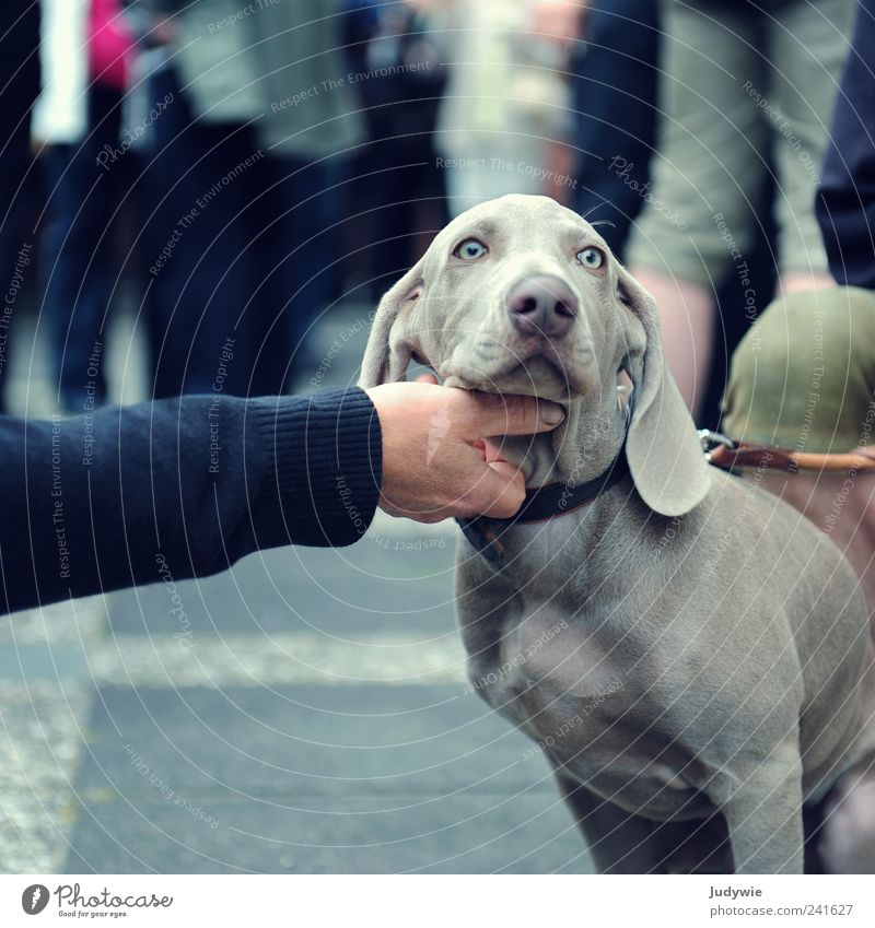 Let me scratch you. Arm Hand Gray-haired Short-haired Animal Pet Dog Baby animal Relaxation To enjoy Brash Cute Blue Contentment Self-confident Cool (slang)