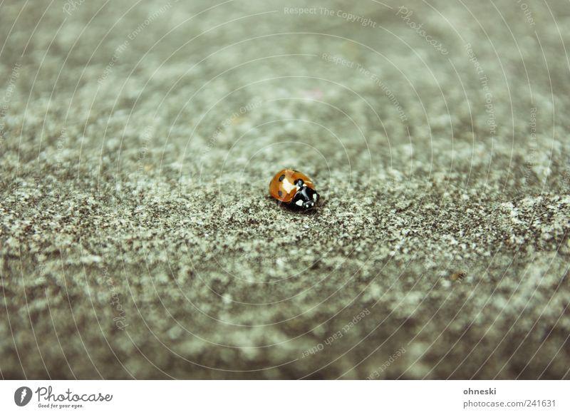 Loneliness Animal Happy Stone Concrete Wild animal Beetle Ladybird Homesickness