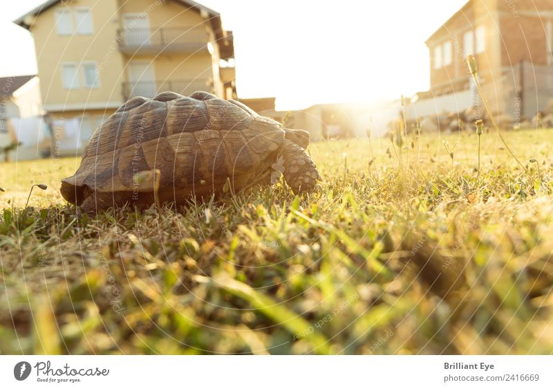 atmosphere of departure Summer Garden Nature Sunrise Sunset Sunlight Warmth Meadow Animal Turtle 1 Movement Walking Infinity Optimism Brave Life Diligent