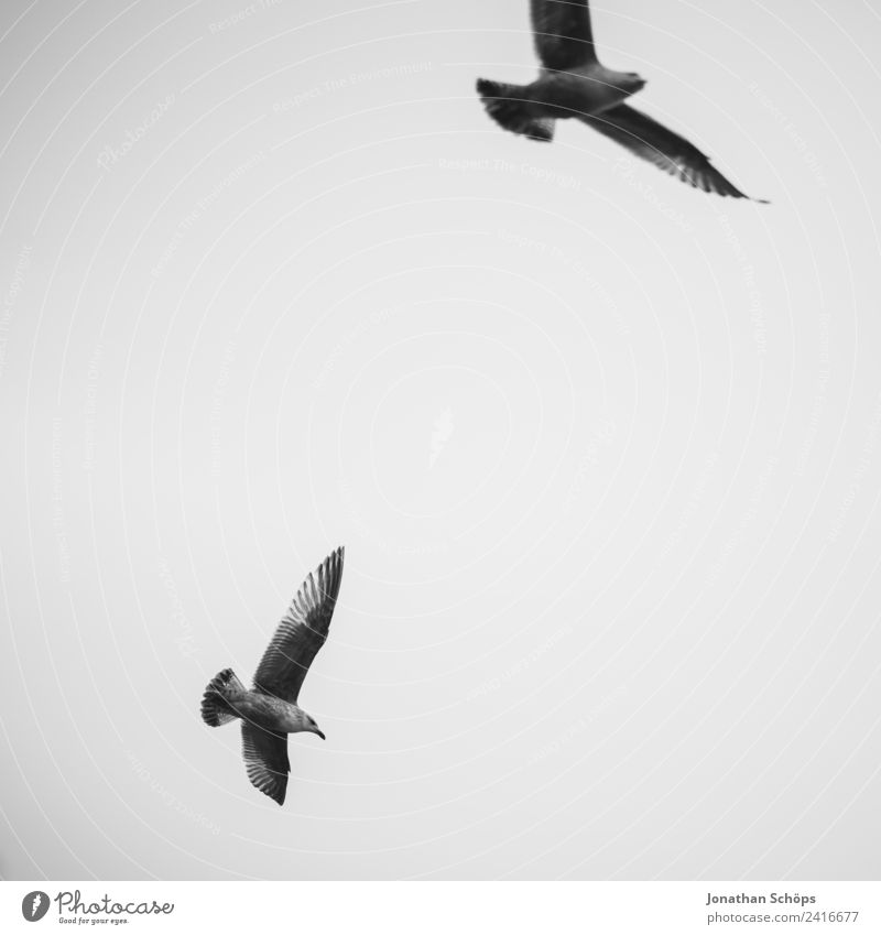 Sky Ocean Clouds Animal Background picture Environment Coast Bird Flying Pair of animals In pairs Air Group of animals Climate Elements Seagull