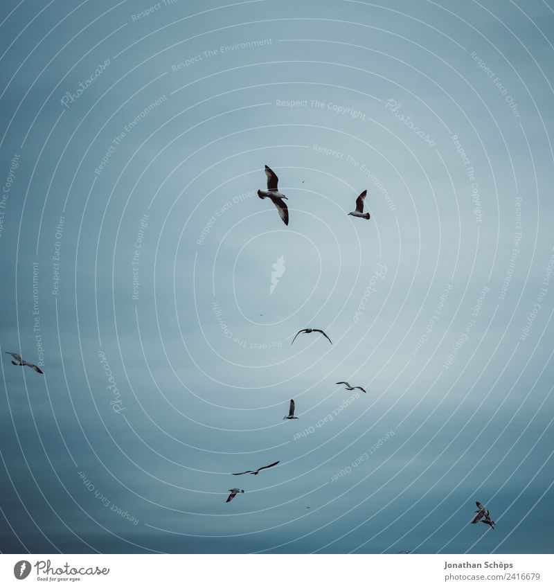 Sky Blue Ocean Clouds Animal Dark Background picture Environment Cold Coast Bird Flying Air Group of animals Climate Elements