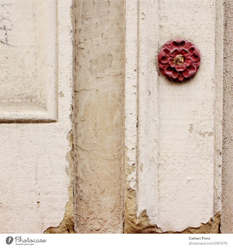 Old Beautiful Flower Red Loneliness Wall (building) Blossom Style Wall (barrier) Art Stone Design Elegant Individual Uniqueness Friendliness