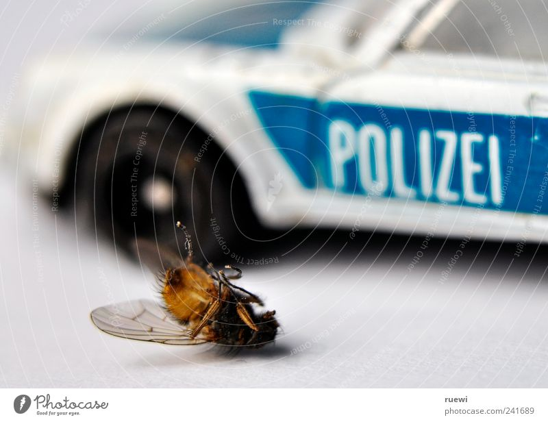Crime Scene Police Force Pedestrian Traffic accident Car Police car Animal Wing Fly 1 Lie Broken Blue Black White Compassion Death Guilty Inequity Criminality