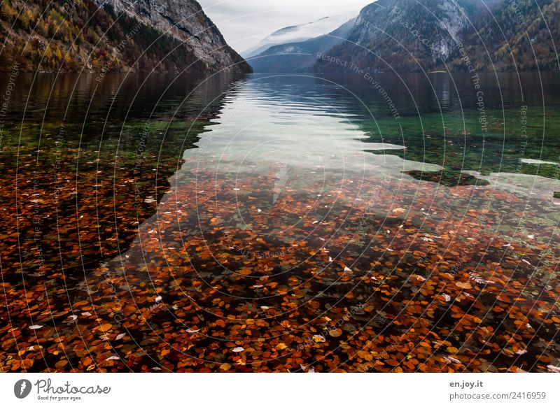 Nature Vacation & Travel Landscape Calm Far-off places Mountain Environment Autumn Sadness Death Germany Lake Trip Transience Alps Grief