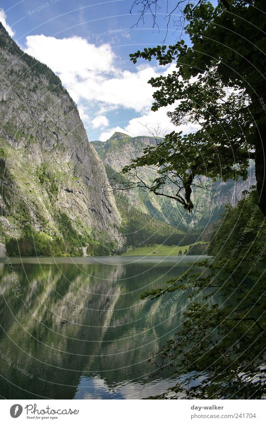 Prehistoric times at Königssee Nature Landscape Plant Water Sky Clouds Summer Beautiful weather Tree Grass Bushes Hill Rock Alps Mountain Peak Famousness