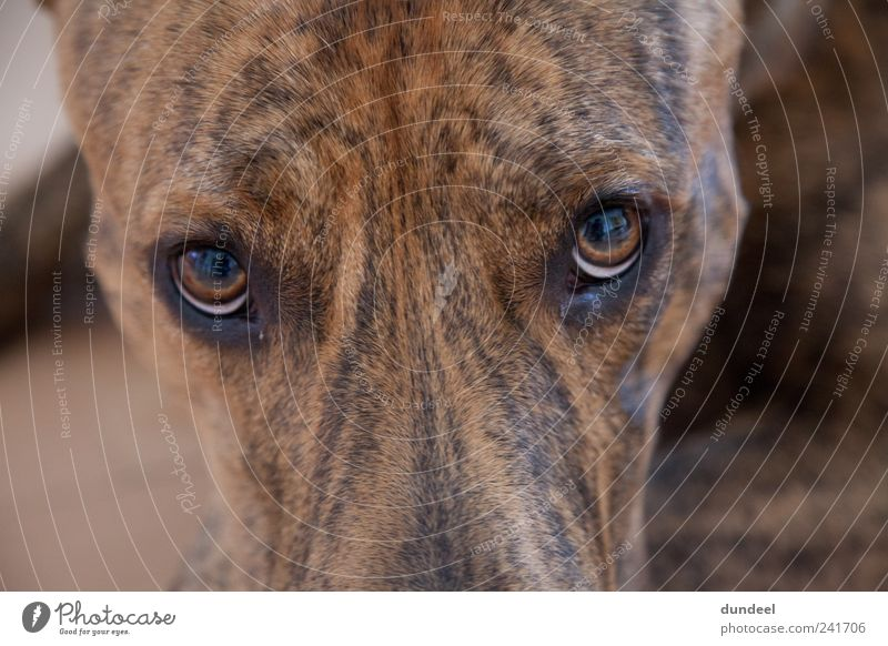 FACE 2 FACE with DOG Pet Dog Animal face Emotions Passion Acceptance Loyal Love of animals Truth Joy Friendship Identity Teamwork Colour photo Interior shot