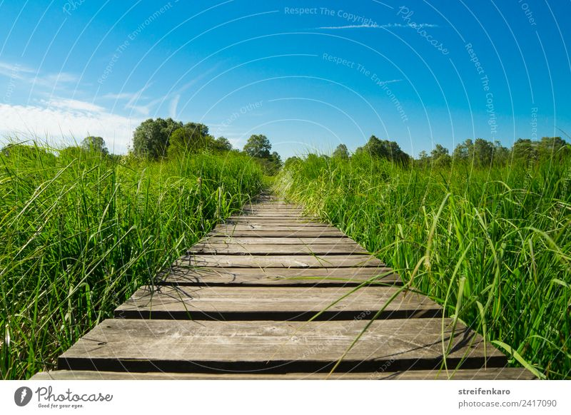 Let's go! Harmonious Contentment Relaxation Calm Meditation Summer Hiking Environment Nature Landscape Plant Sky Spring Grass Bog Marsh Lanes & trails Wood