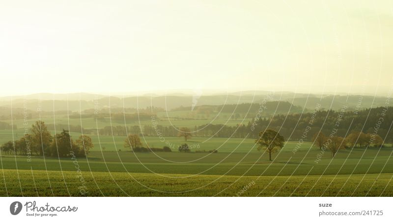 Vogtland in the morning Far-off places Environment Nature Landscape Sky Cloudless sky Horizon Summer Climate Beautiful weather Tree Meadow Field Authentic