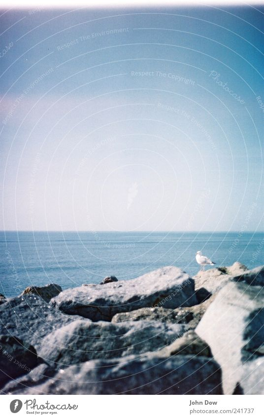 Ocean Beach Vacation & Travel Animal Far-off places Freedom Bird Coast Horizon Rock Vantage point Infinity Longing Analog Bay Seagull