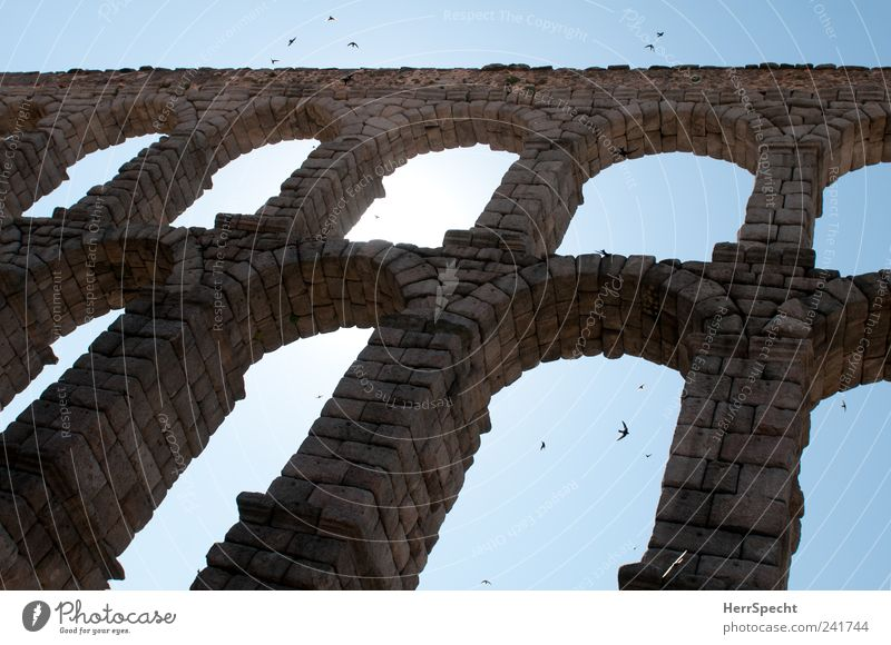Blue Gray Stone Bird Flying Landmark Spain Tourist Attraction Archway Flock Swallow Aqueduct Segovia