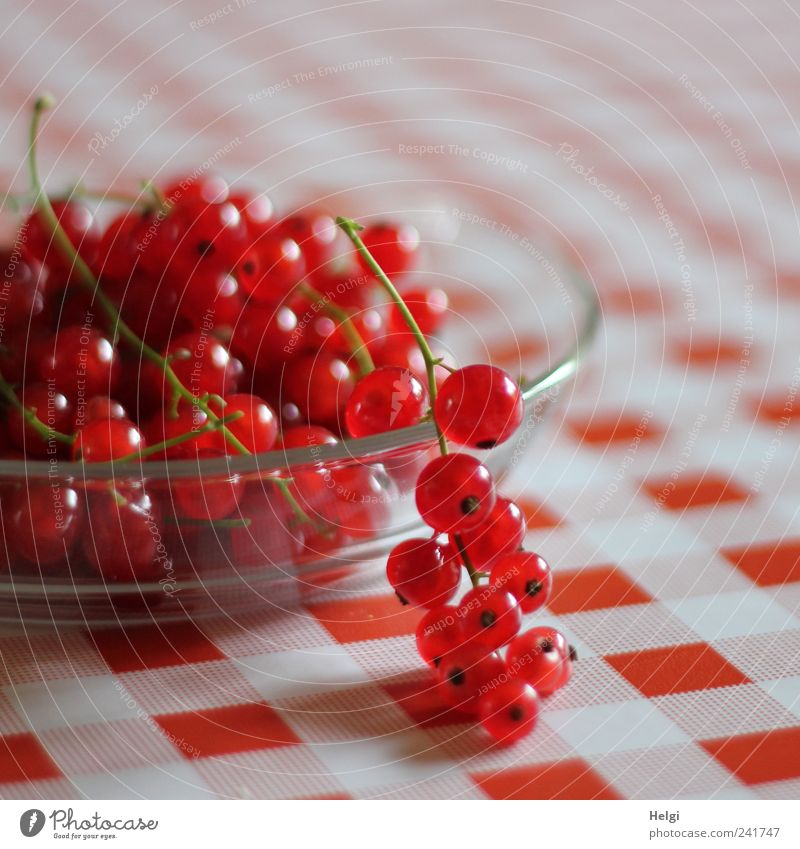 Green White Red Small Healthy Lie Glass Fruit Natural Food Fresh Nutrition Esthetic Round To enjoy Appetite