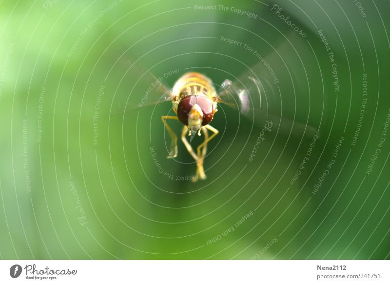 Nature Green Summer Animal Yellow Movement Air Fear Fly Flying Animal face Wing Insect Observe Bee Hover