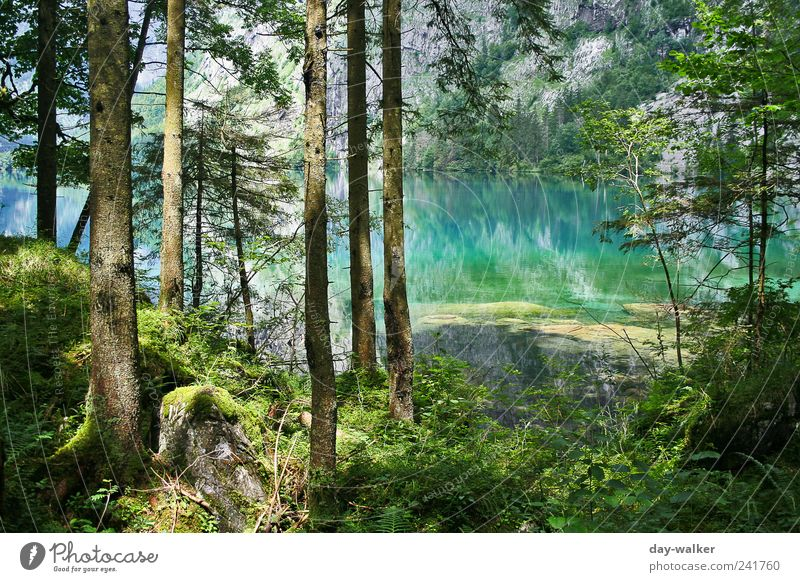 Nature Water Tree Green Blue Plant Summer Leaf Forest Grass Mountain Landscape Brown Rock Earth Bushes