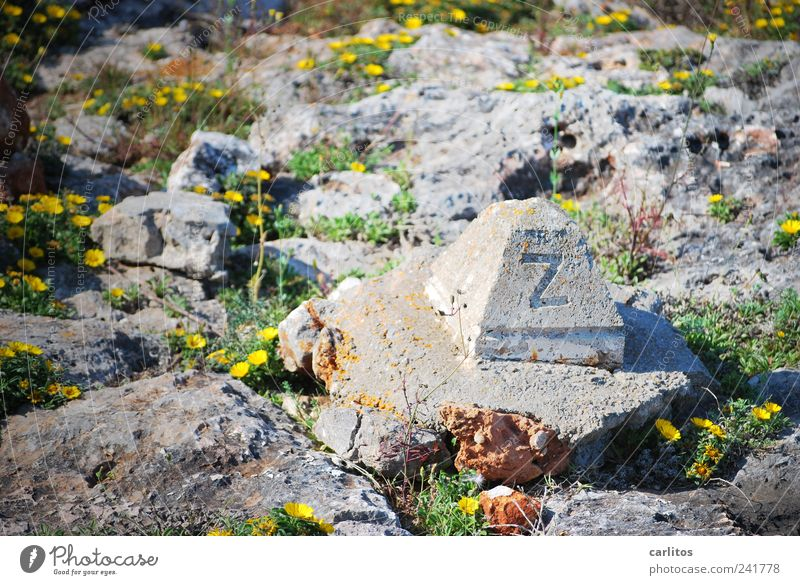 Green Plant Summer Yellow Blossom Gray Stone Warmth Concrete Signs and labeling Rock Blossoming Border Monument Dry Beautiful weather