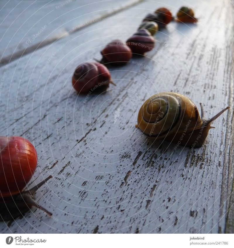 Wood Multiple Sports team Group of animals Row Sporting event Snail Crawl First Competition Feeler Slowly Slimy Snail shell Structures and shapes Sequence