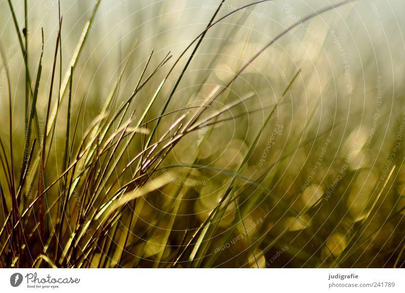 Nature Plant Summer Grass Environment Growth Wild Natural Beach dune