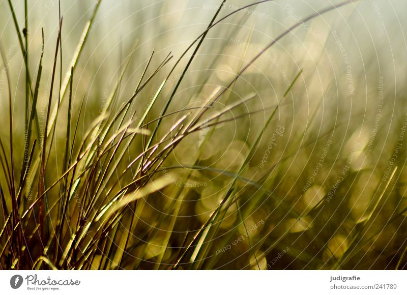 Nature Plant Summer Grass Environment Growth Wild Natural Beach dune