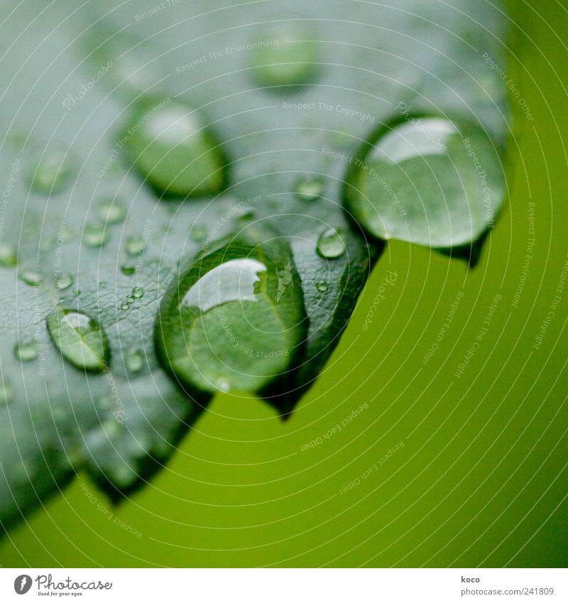 water drops Style Beautiful Life Harmonious Relaxation Spa Nature Water Drops of water Spring Summer Leaf Touch Dream Sadness Fluid Wet Round Juicy Clean Point