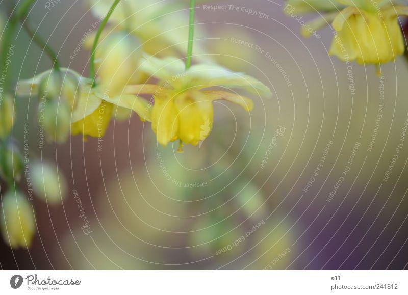 Nature Green Beautiful Plant Flower Yellow Environment Garden Blossom Moody Park Gold Elegant Romance Fantastic Mysterious