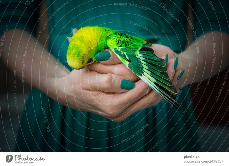 end Animal Pet Wild animal Dead animal Bird Wing Budgerigar Touch To hold on Carrying Dark Small Illness Gloomy Yellow Green Emotions Moody Love of animals