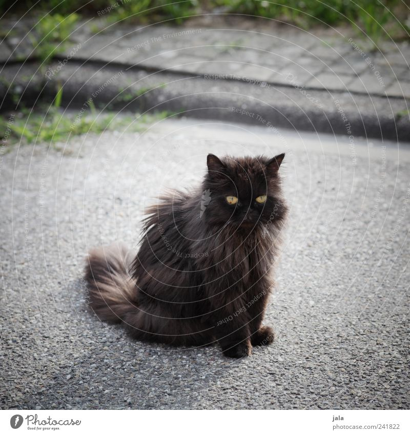 acquaintance Grass Street Lanes & trails Animal Pet Cat 1 To swing Sit Colour photo Exterior shot Deserted Day Animal portrait Forward Prowl Free-living
