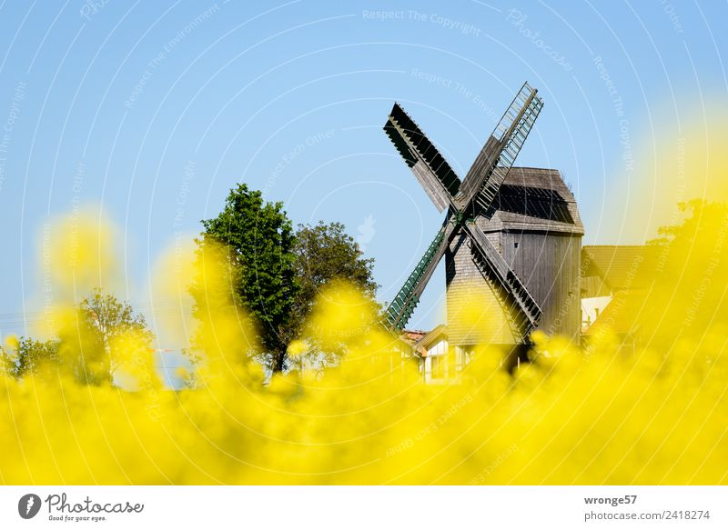 Blue Town Yellow Building Brown Beautiful weather Tourist Attraction Blue sky Windmill Canola field Landscape format Destination Windmill vane