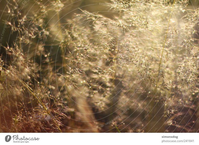 Nature Summer Meadow Playing Landscape Emotions Grass Movement Moody Field Elegant Gold Glittering Illuminate Idyll