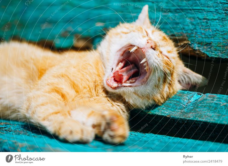 Red kitten cat sleeping on a bench in the park Enchanting Animal pretty Bench Cat catching Colour Companion inquisitorial Cute Domestic Expression Funny Pelt