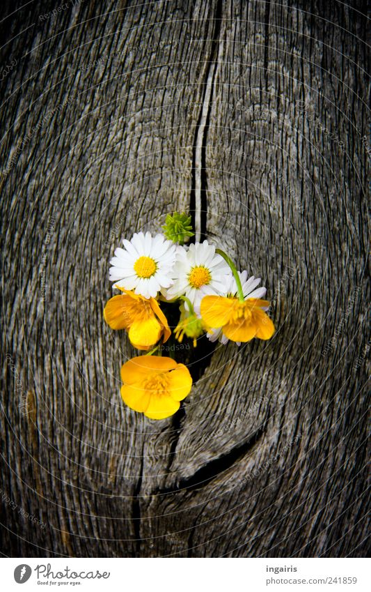 Nature Plant White Flower Black Yellow Life Spring Wood Happy Gray Brown Contentment Illuminate Decoration Door