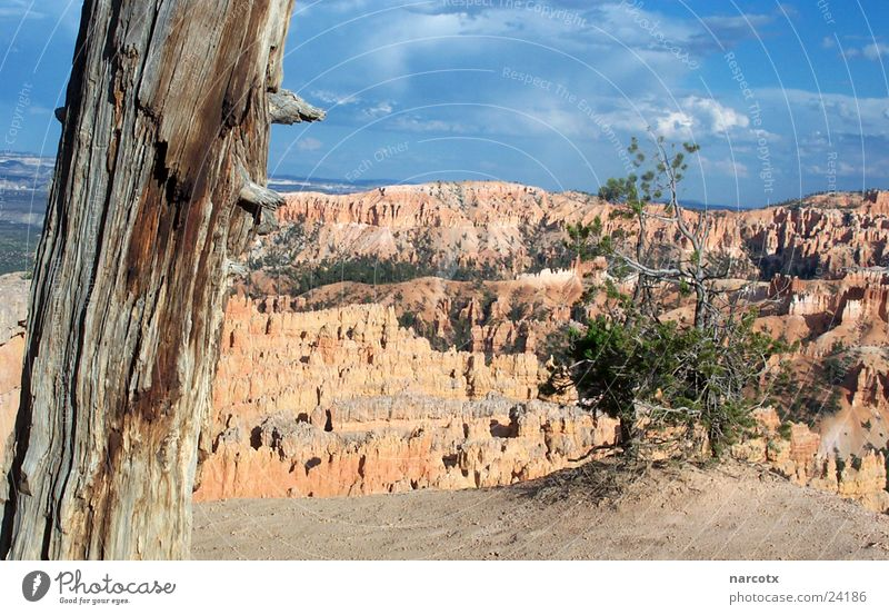 Tree Mountain Stone Rock Perspective Bushes USA Vantage point Americas Canyon National Park South West Bryce Canyon Bryce Canyon National Park