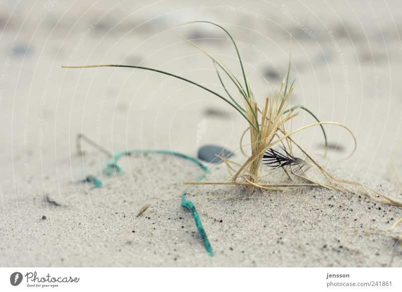 Nature Beach Loneliness Animal Environment Landscape Grass Sand Coast Bright Lie Rope Feather String Environmental pollution Detail