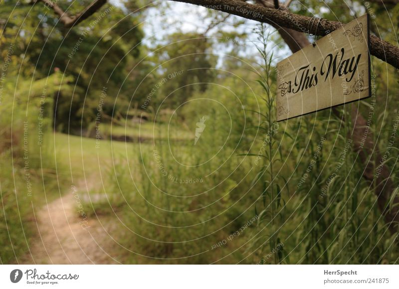 Nature Green Plant Summer Forest Meadow Garden Lanes & trails Park Landscape Signs and labeling Idyll Arrow Road marking