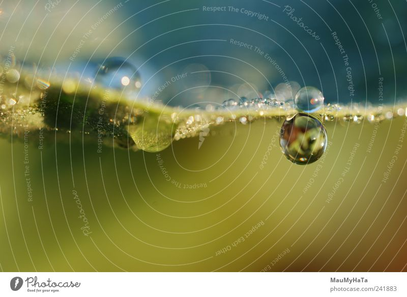 Drops Nature Flower Blue Plant Summer Leaf Yellow Grass Garden Brown Drops of water Gold Fresh Might End Climate