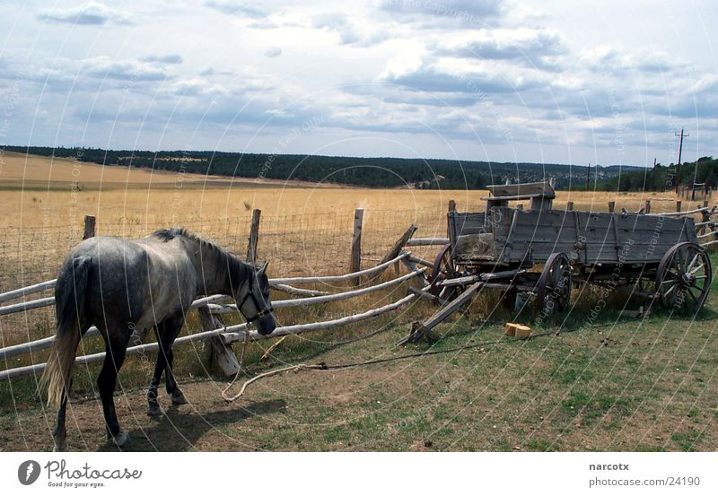 lonely horse South West Americas Horse Meadow Carriage Fence Bad weather Transport USA howde Clouds