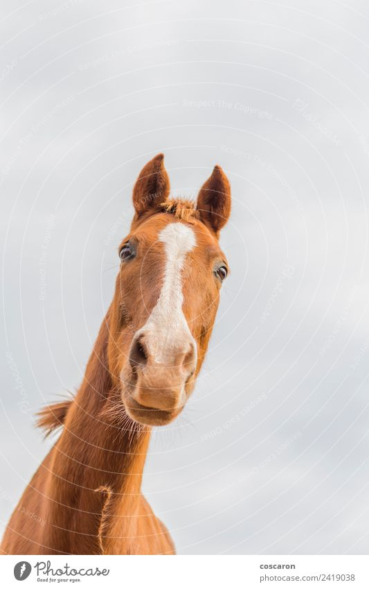 Curious horse against sky. View from below Happy Beautiful Face Mouth Nature Animal Sky Pet Horse Laughter Cute Crazy Wild Blue Brown White background