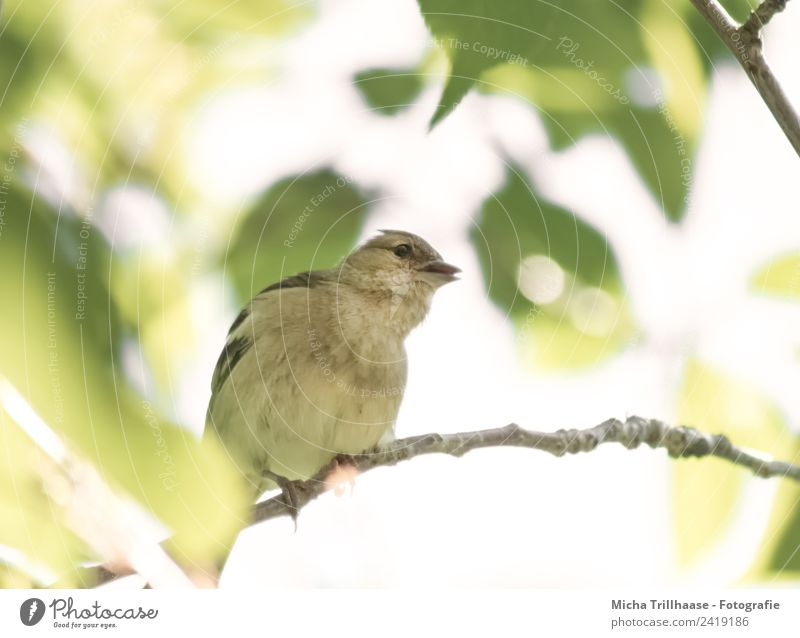 Curious bird Nature Animal Sun Sunlight Beautiful weather Tree Leaf Wild animal Bird Animal face Wing Claw Finch Green finch Beak 1 Observe Communicate