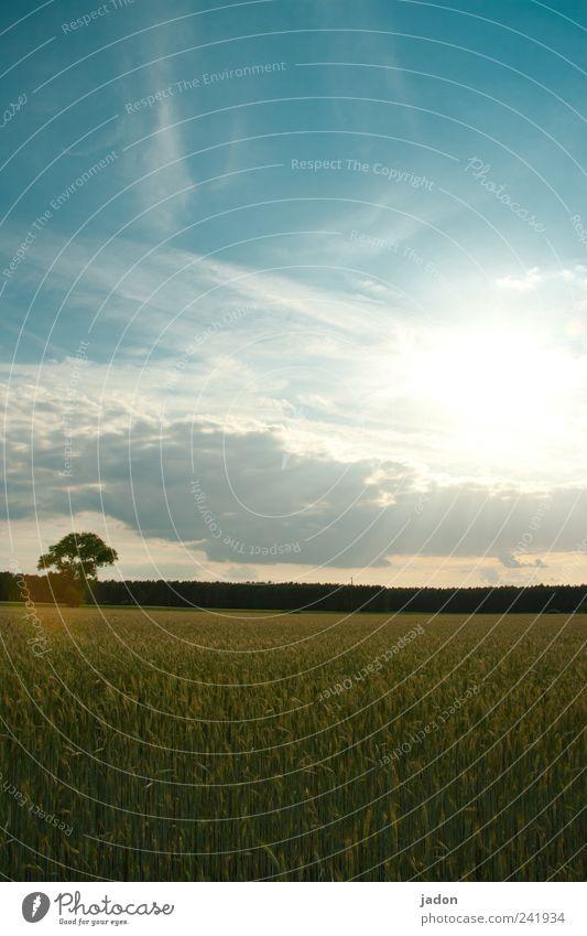 Sky Blue Tree Plant Sun Summer Clouds Nutrition Landscape Food Bright Horizon Field Gold Growth Grain