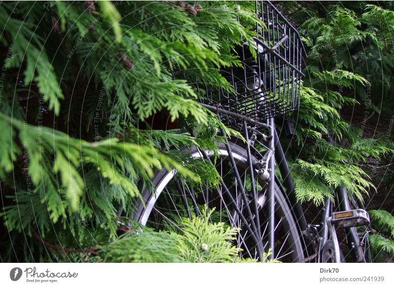 Bicycle overgrown Plant Tree Leaf Twig Twigs and branches Branch Coniferous trees Hedge Passenger traffic Wayside Wheel Basket bicycle basket Pedal Spokes