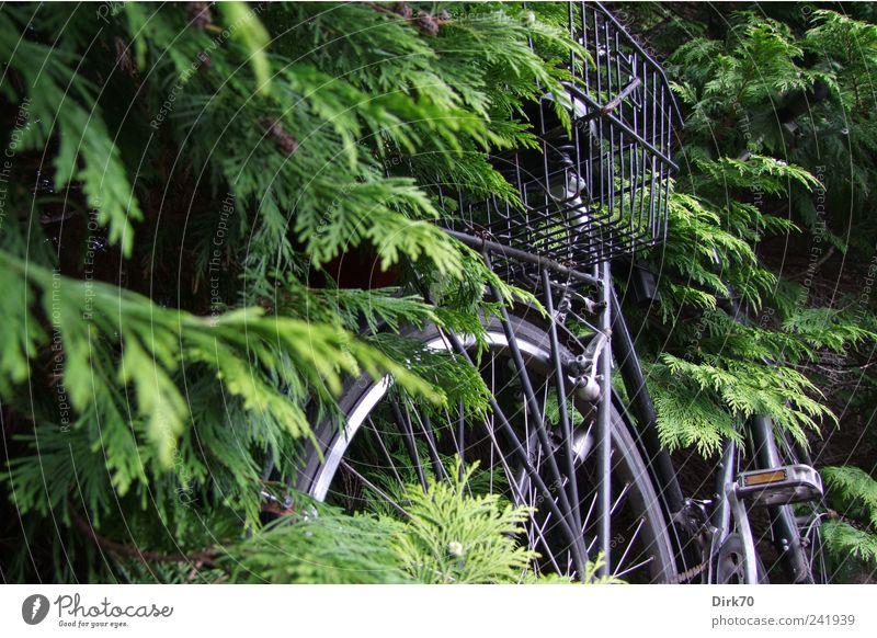 Green Tree Plant Leaf Black Gray Bicycle Growth Change Transience Branch Wheel Twig Silver Basket Passenger traffic