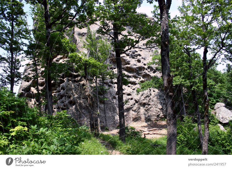 cheese mountain Nature Plant Air Summer Tree Forest Mountain Colour photo Exterior shot